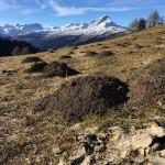 Schweizer Berge swissmountains molehill swissalps graubnden lomo