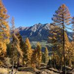 Herbst larch autumn lenzerheide albulatal graubndentourismus graubnden nature awesomenature autumnhellip